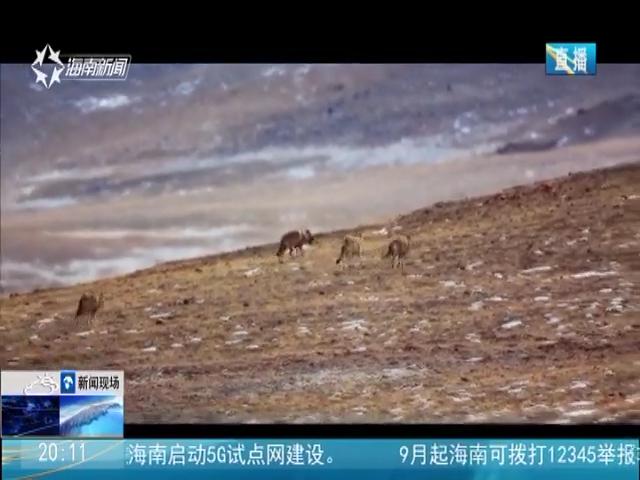 海南:《藏北秘岭》全国上映 预计下月登陆欧美院线