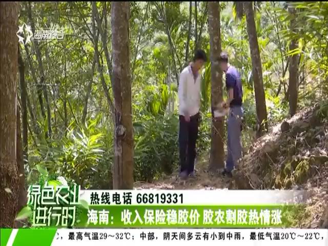 海南:收入保险稳胶价 胶农割胶热情涨
