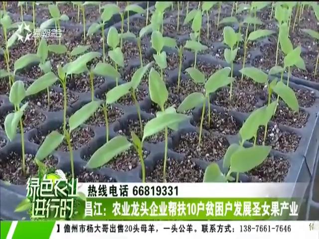 昌江:农业龙头企业帮扶10户贫困户发展圣女果产业