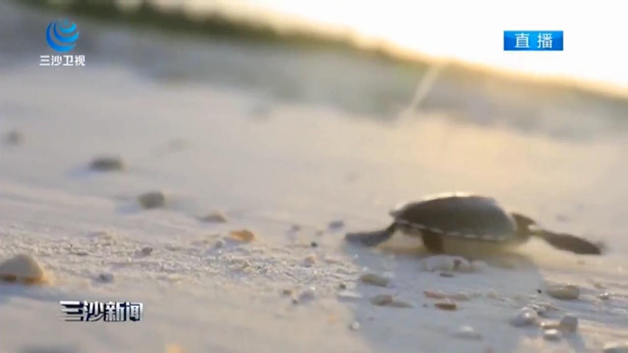 三沙市七连屿西沙洲首次发现绿海龟成功孵化