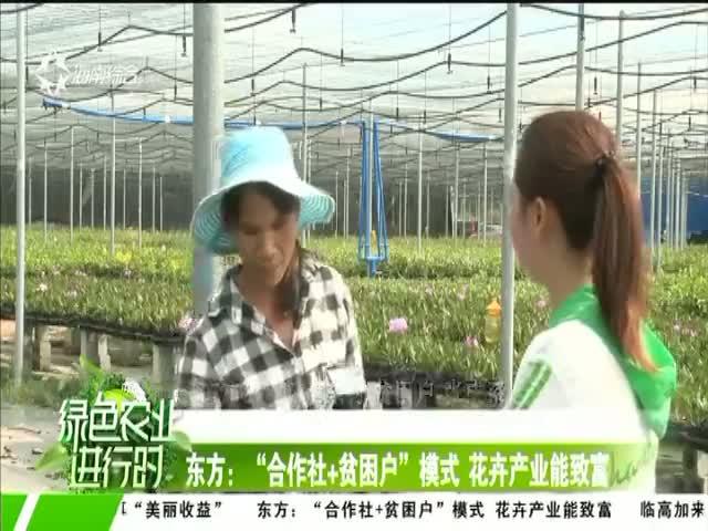 """东方:""""合作社+贫困户""""模式 花卉产业能致富"""