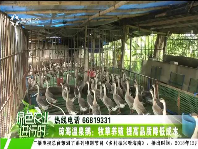 琼海温泉鹅:牧草养殖 提高品质降低成本