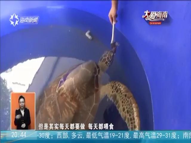 爱心拯救海洋生灵 青年志愿者担当海龟守护神