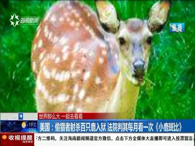 美国:偷猎者射杀百只鹿入狱 法院判其每月看一次《小鹿斑比》