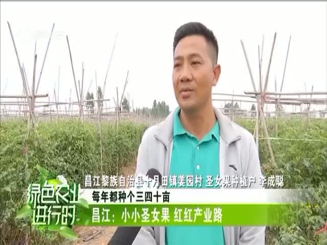 昌江:小小圣女果 红红产业路