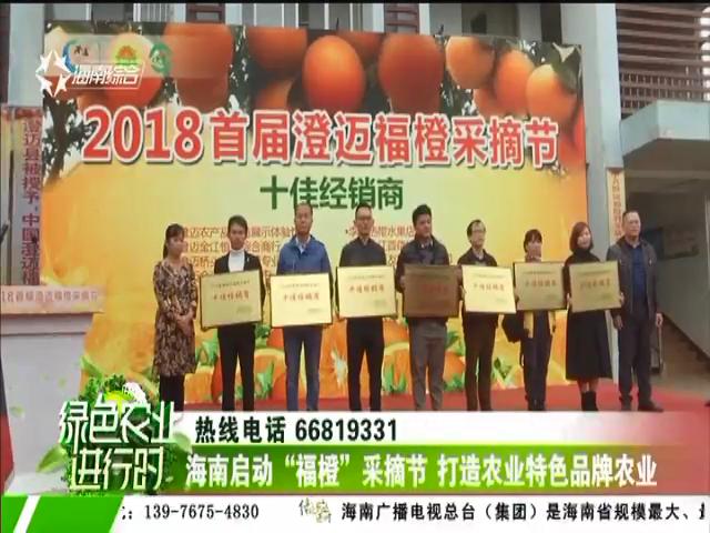 """海南启动""""福橙""""采摘节 打造农业特色品牌农业"""
