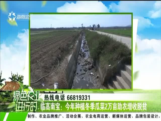 临高南宝:今年种植冬季瓜菜2万亩助农增收脱贫