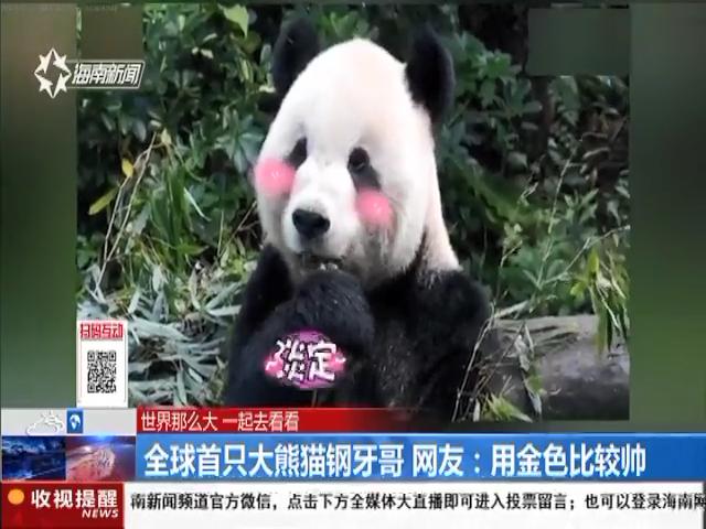 全球首只大熊猫钢牙哥 网友:用金色比较帅