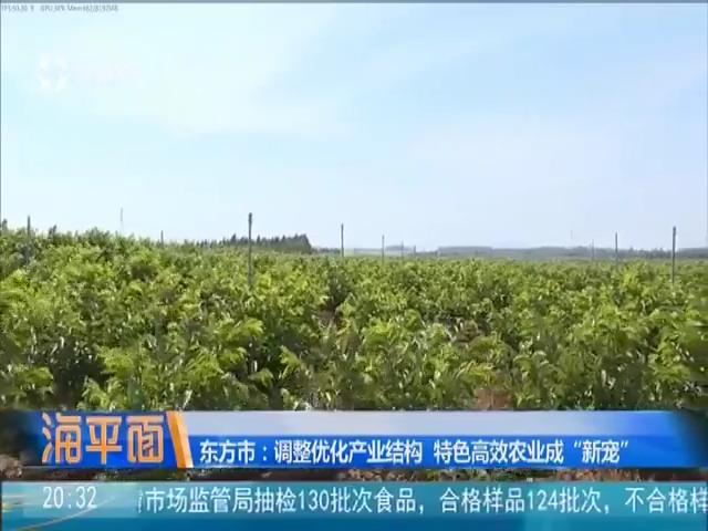 东方转身:从能源工业基地到热带特色农业之乡