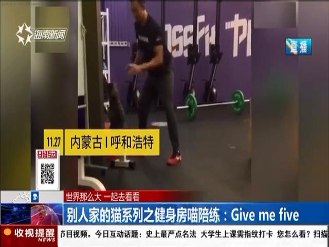 别人家的猫系列之健身房喵陪练:Give me five