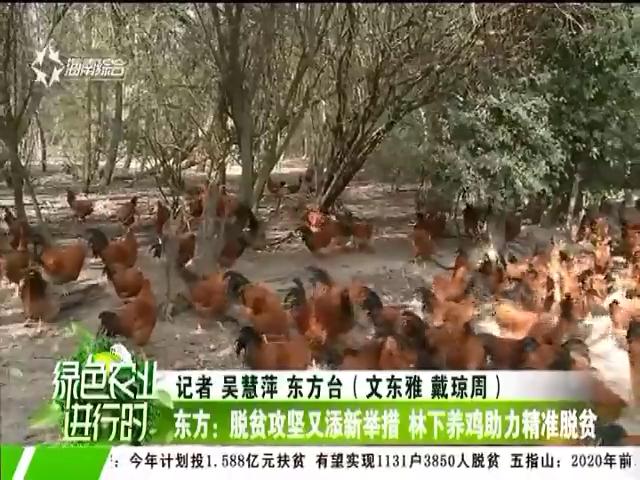东方:脱贫攻坚又添新举措 林下养鸡助力精准脱贫