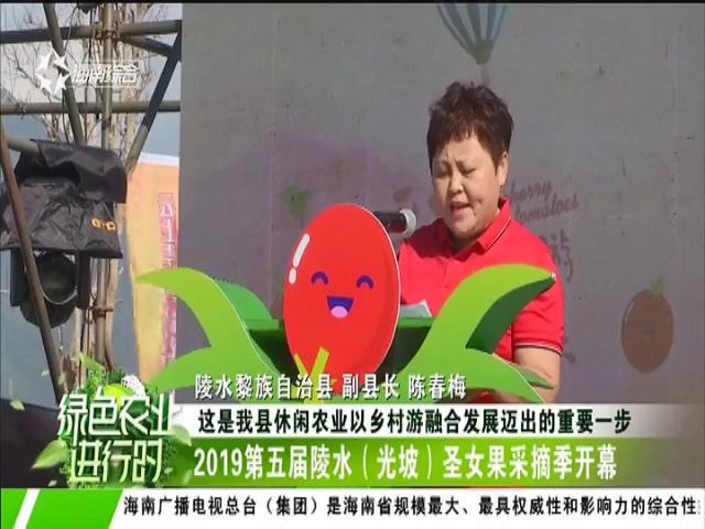 2019第五届陵水(光坡)圣女果采摘季开幕