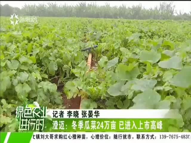 澄迈:冬季瓜菜24万亩 已进入上市高峰