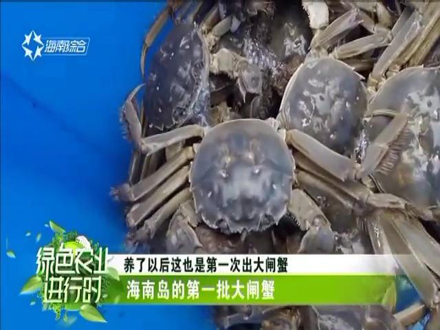 海南岛第一批大闸蟹