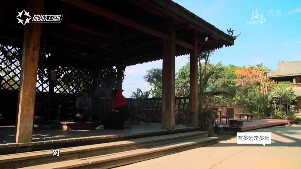 探秘滇西(一)置身千年古茶林 探寻普洱茶的前世今生