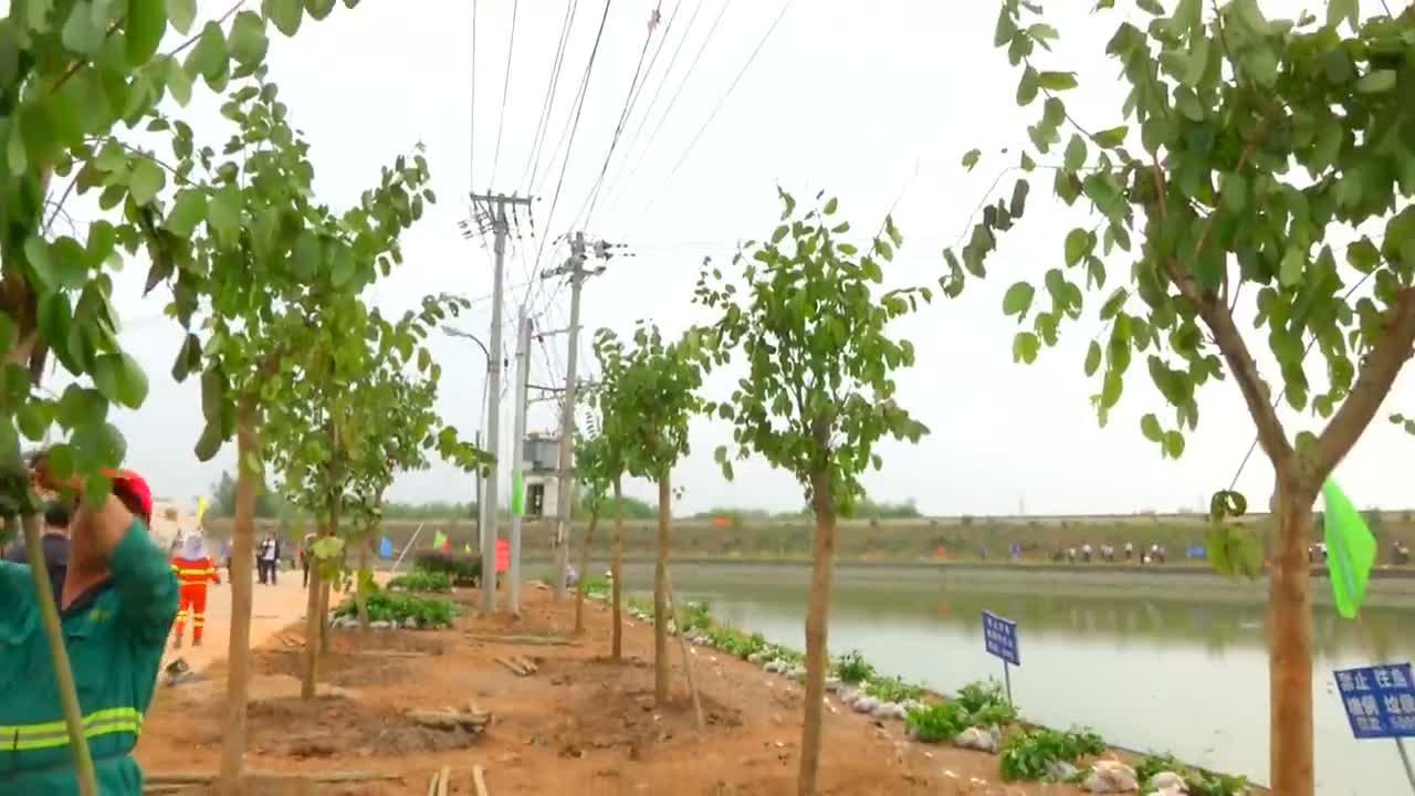 """微视频:3月12日植树节 500余人种下""""绿色希望"""""""