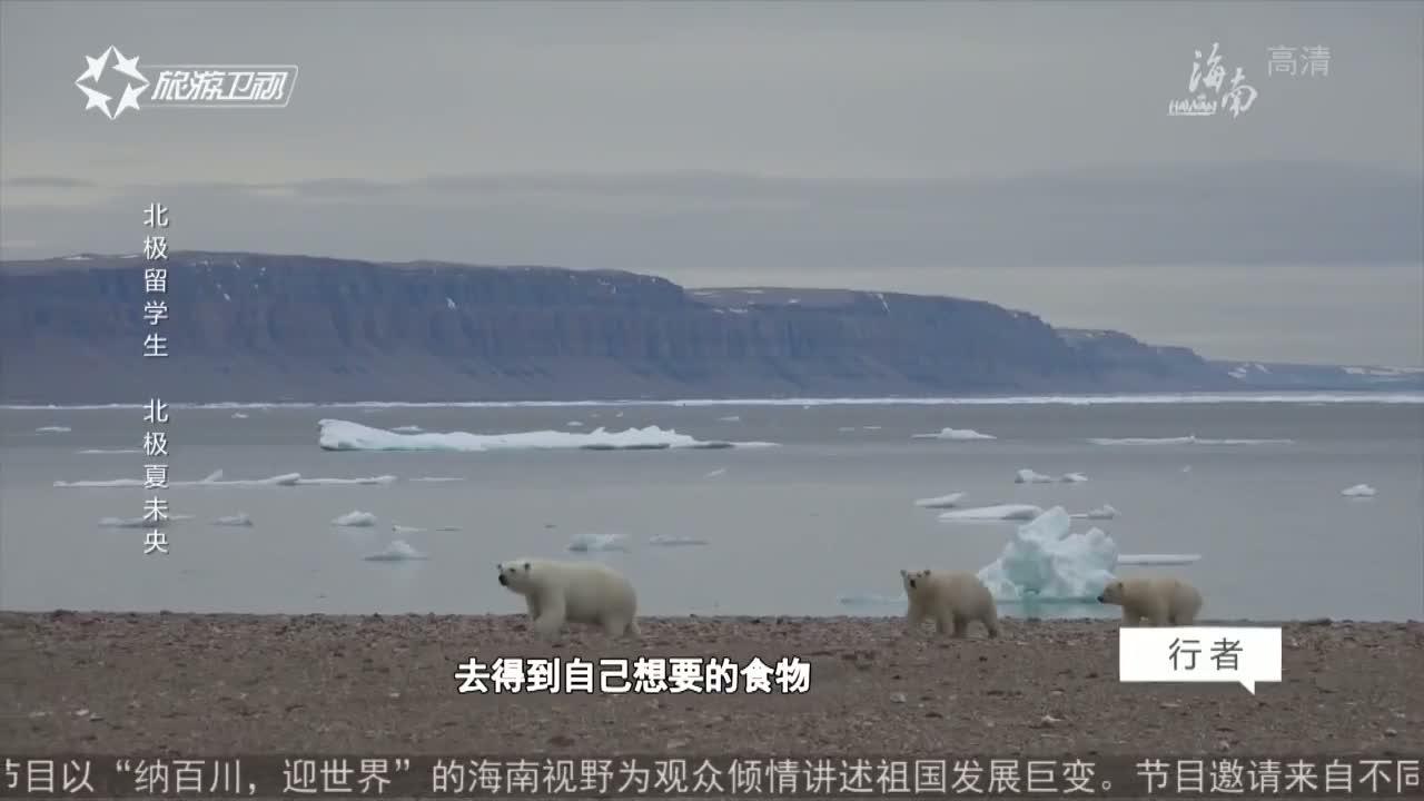 北极留学生 北极夏未央