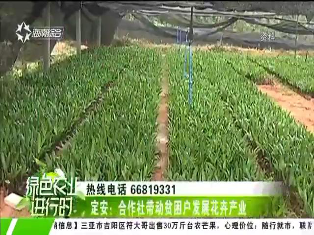定安:合作社带动贫困户发展花卉产业