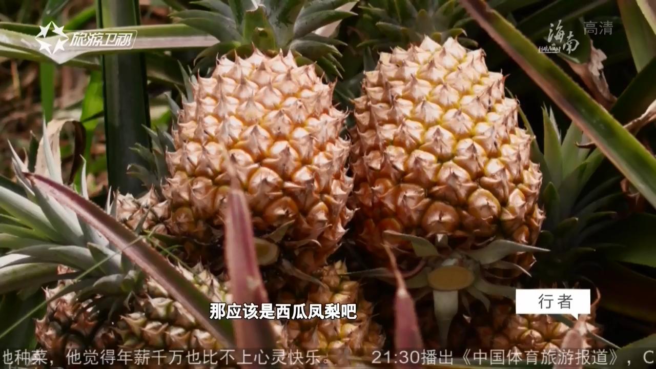 台湾味道 傻瓜凤梨
