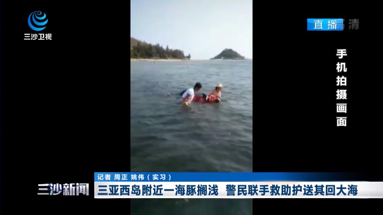 三亚西岛附近一海豚搁浅 警民联手救助护送其回大海