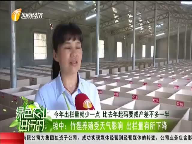 瓊中:竹貍養殖受天氣影響 出欄量有所下降