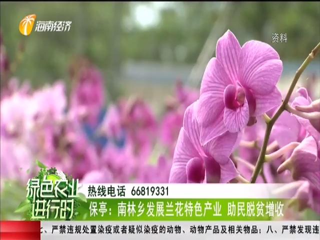 保亭:南林鄉發展蘭花特色產業 助民脫貧增收
