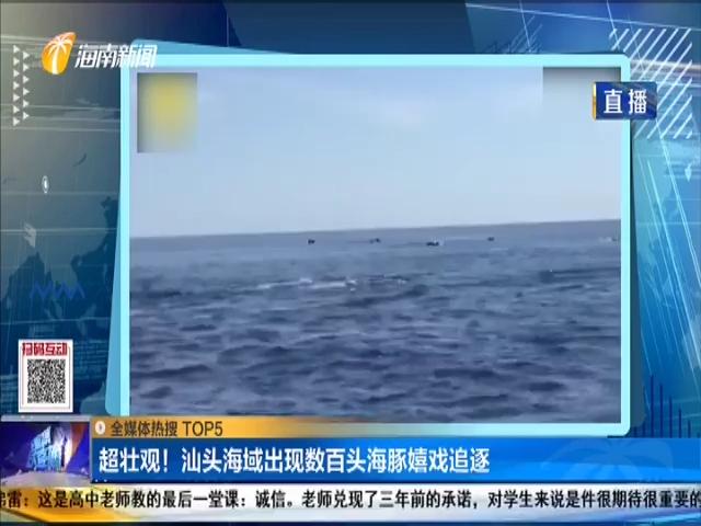 超壮观!汕头海域出现数百头海豚嬉戏追逐