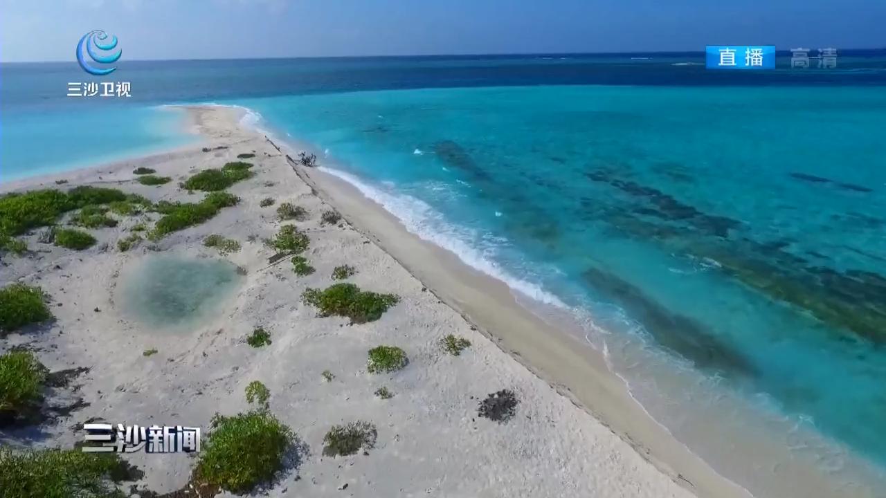 三沙:七连屿南沙州发现今年第一窝海龟蛋