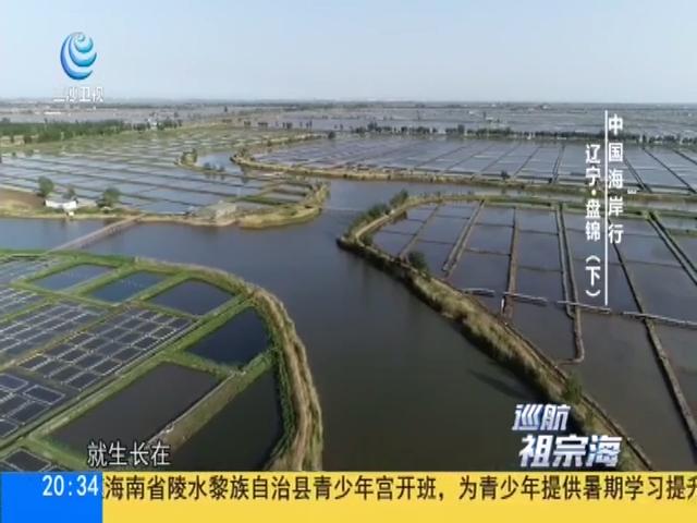 中國海岸行 遼寧·盤錦(下)