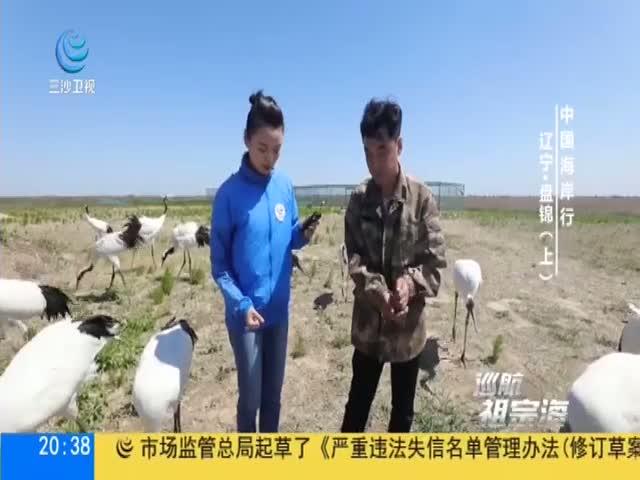 中國海岸行 遼寧·盤錦(上)
