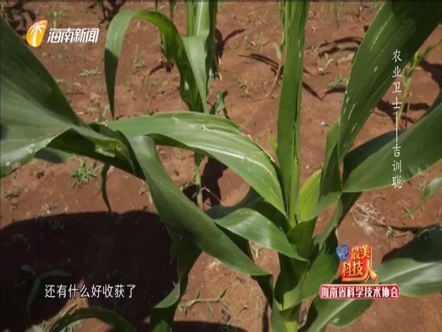 農業衛士——吉訓聰