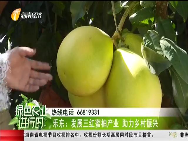 乐东:发展三红蜜柚产业 助力乡村振兴