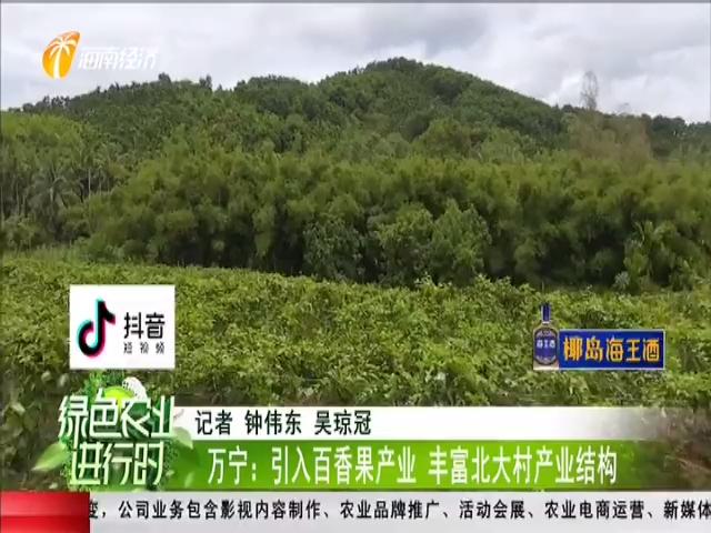 万宁:引入百香果产业 丰富北大村产业结构
