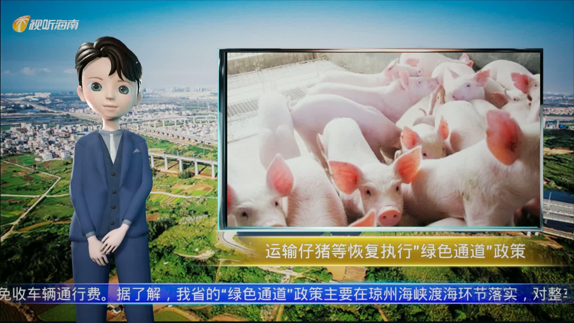 "AI播报|9月起,海南运输仔猪及冷鲜猪肉恢复执行""绿色通道""政策"