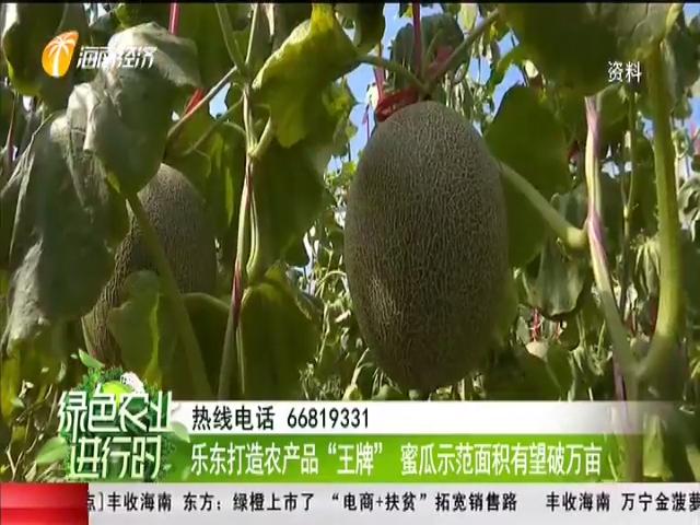 """乐东打造农产品""""王牌"""" 蜜瓜示范面积有望破万亩"""