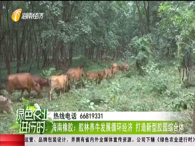 海南橡膠:膠林養牛發展循環經濟 打造新型膠園綜合體