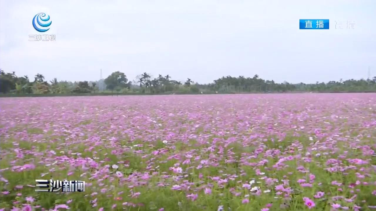 琼海:龙寿洋万亩公园花海开园 芬芳飘溢迎春到