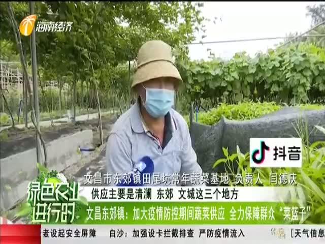"""文昌东郊镇:加大疫情防控期间蔬菜供应 全力保障群众""""菜篮子"""""""