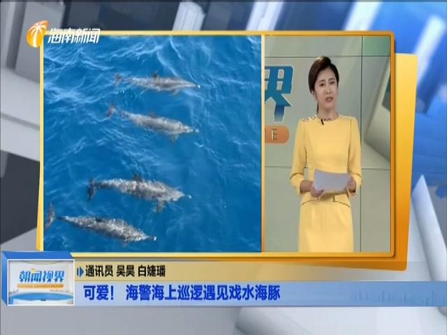 可爱!海警海上巡逻遇见戏水海豚