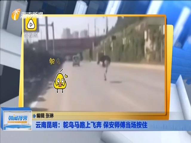 云南昆明:鸵鸟马路上飞奔 保安师傅当场按住