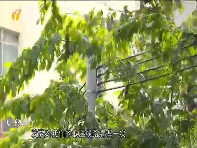 海口:供电部门线路清障 加强防风保障用电