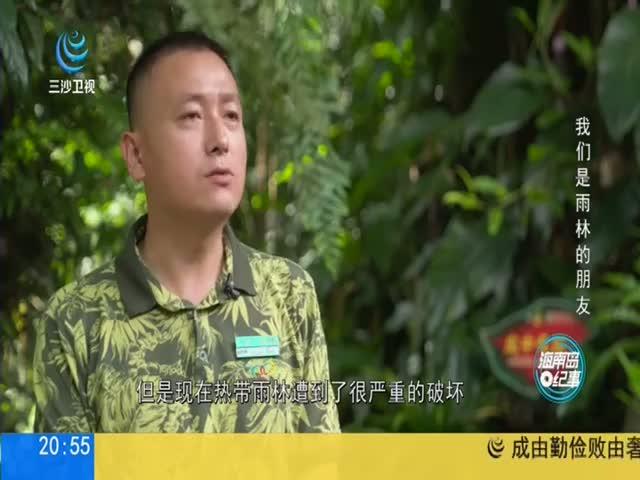 海南岛纪事 我们是雨林的朋友