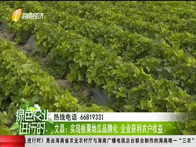文昌:实现板栗地瓜品牌化 企业获利农户收益