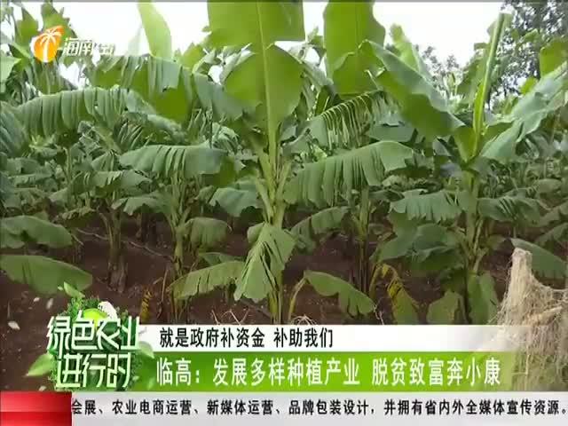 临高:发展多样种植产业 脱贫致富奔小康