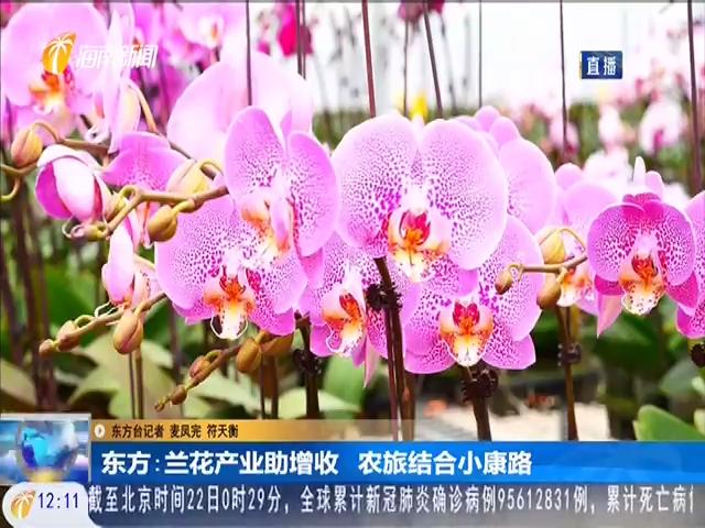 东方:兰花产业助增收 农旅结合小康路