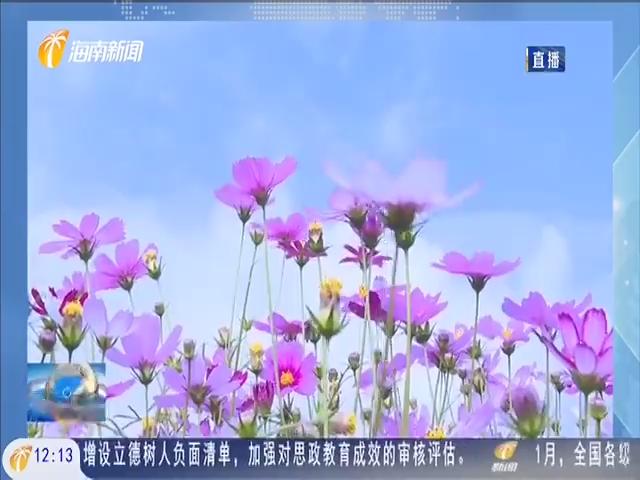 琼海:百花迎春 龙寿洋万亩田野公园花海正式开园
