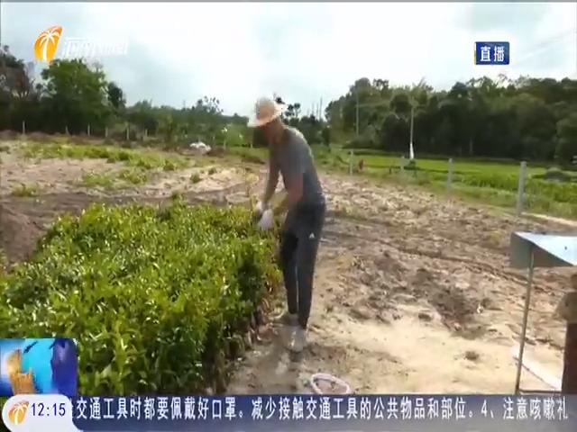 文昌:打造乡村振兴示范点 振联村入选首批国家森林乡村名单