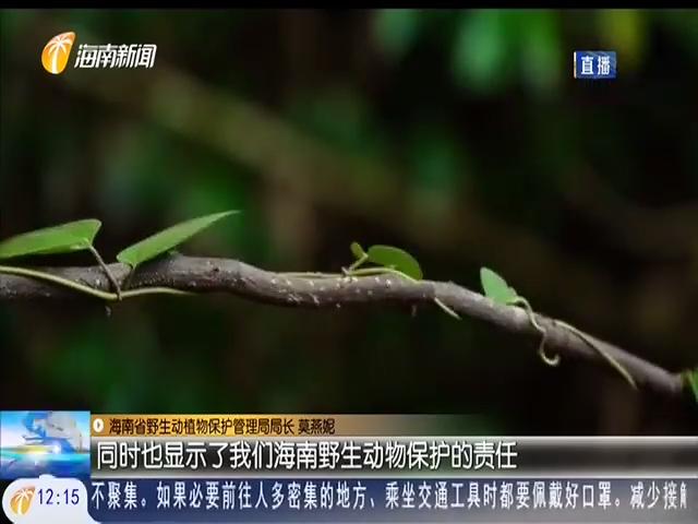 新版《国家重点保护野生动物名录》实施 海南有161种 占全国的23.5%