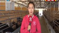 """三亚罗蓬村:""""农业+""""""""合作社+"""