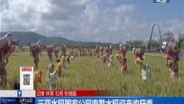 三亚水稻国家公园南繁水稻迎来收获季